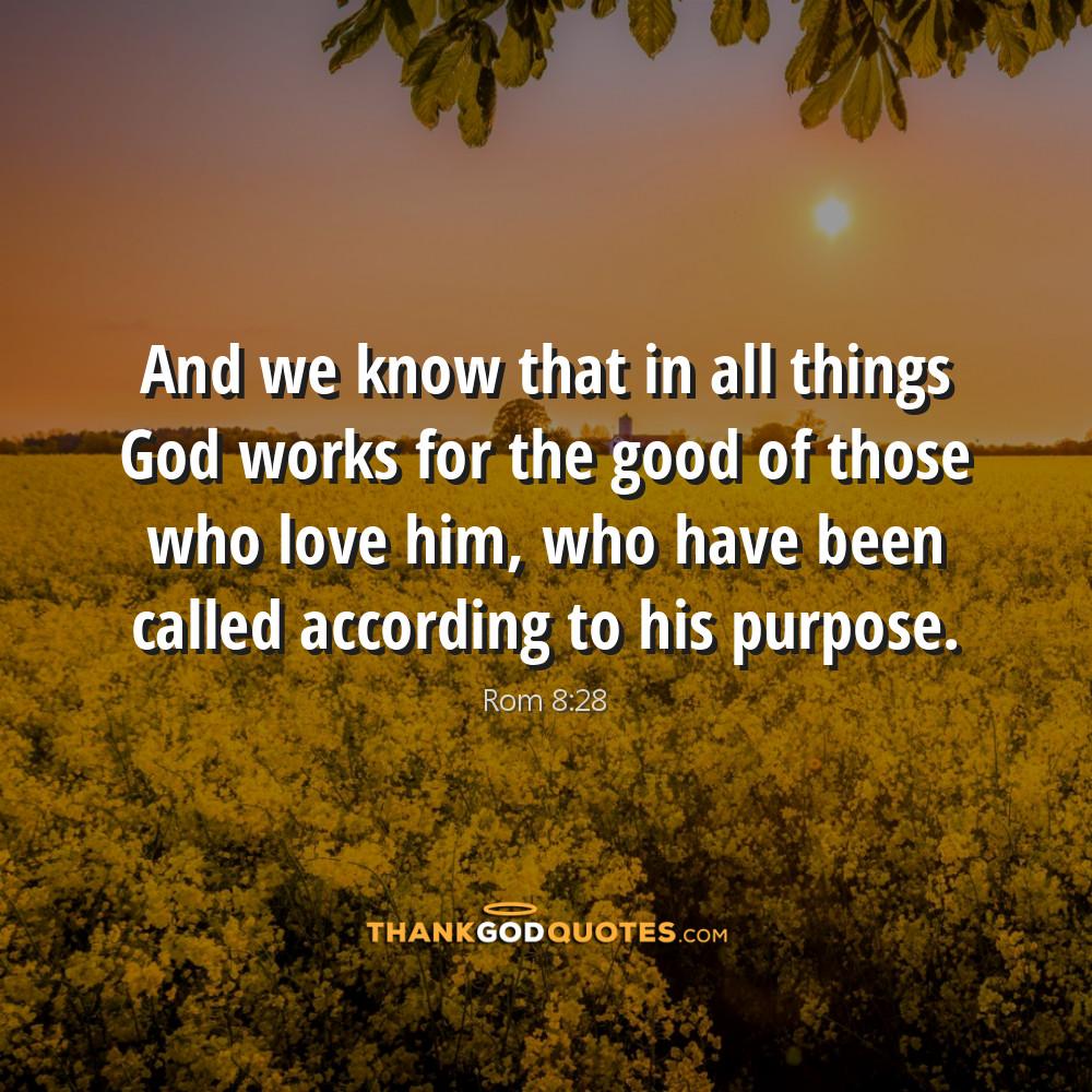 Rom 8:28